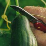 Report of the talk: Richard Baldwin, Growing Vegetables