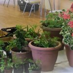 9 May 2021: Plant Sale