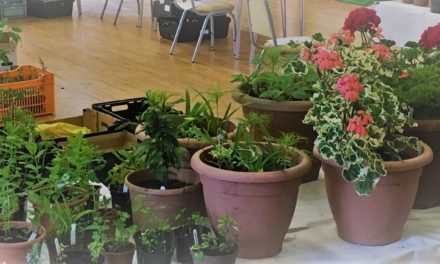 19 May 2019: Plant Sale