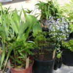 Report of June Plant Sale